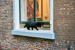 Cat looking for a opportunity (Michiel2005) Tags: cat kat poes doelensteeg window raam nederland netherlands leiden holland