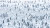 Lapland Abstract (Old-Man-George) Tags: europe finland georgewheelhouse landscape luosto pyha saariselka suomi cold frost snow trees winter wwwgeorgewheelhousecom a1702952