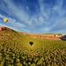 Hot Air Ballooning in Sedona, AZ - Sony A7R III (SnyderPix) Tags: sony a7r ii iii sonya7riii a7riii a7r3 sonyalpha alphauniverse sonyprosupport landscape arizona sedona sedonaaz az balloon hotairballoon balloonride ballooning