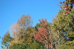 Wooded Area. (dccradio) Tags: lumberton nc northcarolina robesoncounty outdoors outside morning goodmorning fall autumn harvest nikon d40 dslr sky bluesky nature natural tree trees foliage autumnfoliage fallfoliage