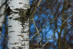 DSC00303 (baylersmith) Tags: minnesota state park nature statepark hunting dog fall