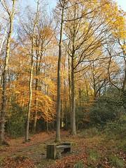 Sit awhile (katy1279) Tags: autumnleavesyellowcolourfulbeautynature seatbenchemptyseat