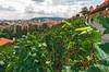 Vinyard Hill (fotofrysk) Tags: view landscape vinyard praguesoldestvinyard starezameckeschodylane pedestrians lane tower buildings vines grapes castledistrict easterneuropetrip prague praha czechrepublic sigmaex1020mmf456dchsm nikond7100 201709226553