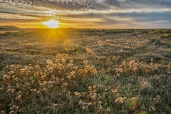Backlit Thistles (andybam1955) Tags: coastal northnorfolk landscape norfolk eveninglight