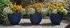 Triplets (idunbarreid) Tags: pots alyssum marigolds