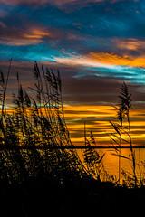 Colored siluet (lengel_photography) Tags: donau nature sun sunset water sunrise siluet sky colored landscape tree