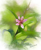Peach flower (gingerthree33@yahoo.com) Tags: pink peach flower leaves peachflower nature artisticflowers