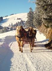♪ Jingle All The Way ♪ (Daphne-8) Tags: horses sleigh pferde paarden cheveaux caballo cavallo slitta schlitten snow neve nieve schnee slee sneeuw neige traîneau trineo winter hiver invierno inverno trenó cavalo