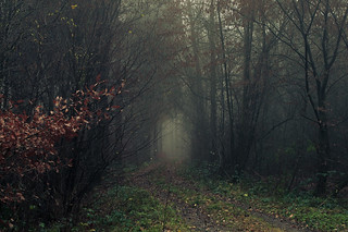 In foggy Forests