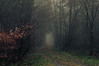 In foggy Forests (Netsrak) Tags: eu europa europe forst natur nebel wald fog forest mist nature woods