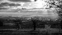 Alsace Ribeauvillé - 1 (.Art_Thierry_Lempereur) Tags: rayon vigne grand cru ribeauville alsace clos saint vincent
