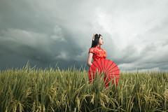 way home (JesseChong74) Tags: nikond700 nikon tamron godox phottix paddy chinese photography strobe sekinchan