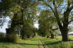 summer moods (JoannaRB2009) Tags: summer mood nature green path alley avenue tree trees old oldtrees landscape view sunny weather light shadow golejewko greaterpoland wielkopolska polska poland