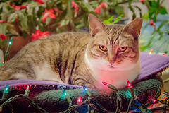 Boots - Merry Christmas 2017 (t conway) Tags: