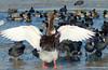 Under my wings (Maarten Kleijkamp) Tags: winter frozen ice glacier kralingen rotterdam kralingseplas