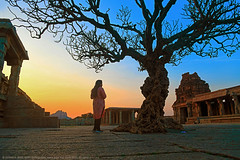 GOLDEN HOUR (GOPAN G. NAIR [ GOPS Photography ]) Tags: gopsorg gops gopsphotography gopangnair gopan photography hampi twilight evening sunset tree vittala temple golden hour architecture history karnataka