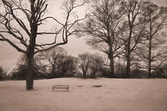 Let it snow, let it snow, let it snow... (RCARCARCA) Tags: story trees twigs verulamium stalbans monochrome silhouette bench people verulamiumpark 5diii park canon branches 70200l snow