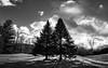One of those days... (Nicholas Erwin) Tags: panoramic panorama landscape nature naturephotography trees contrast blackandwhite monochrome bw shadows nikon d610 nikkor 2018g waterbury vermont vt unitedstatesofamerica usa america silhouette fav10 fav25 fav50