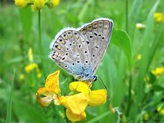 Butterfly 1511