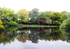 Irish park (jann.haemers) Tags: nature ireland dublin water park autumn fall 2017 trees colorful colourful irish ducks city europe ierland iers