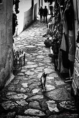 _ZA07359 (zalo_astur) Tags: cat gato calle calleja mercado medina zoco africa empedrado d700 nikon callejero callejeando solitario libertad vivir indiferencia curiosidad callejon felino animal