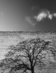 impression (-dubliner-) Tags: wall prato tree shadow cloud stone