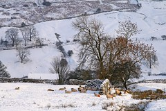 Meet Me On The Corner (RoystonVasey) Tags: canon eos 400d sigma 1770mm zoom north yorkshire dales ydnp west burton walden valley waldendale snow winter sheep