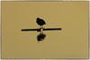 P1010074 (fotokunst_kunstfoto) Tags: stimmung abendstimmung mood silhouette silhouett silhouetten schattenbilder umriss kontur konturen schattenriss