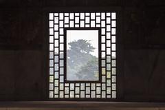 Cubic Window (Berman Yaniv) Tags: redfort delhi india window bird tree exotic