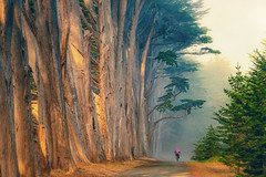 Biking Through the Misty, Foggy Woods (pixelmama) Tags: mossbeach california fitzgeraldmarinereserve connieswoods fog mist cypresstrees bicylist pink landscape sunrise