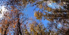 26 (emmess2) Tags: campiglia cinqueterre spezia autumn fall leaves
