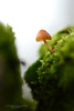 On the edge (srepton) Tags: fungi moss macro morning magical macrounlimited green nature nikon naturephotography
