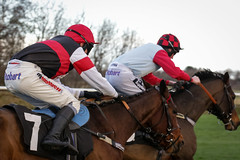 Musselbrugh Races EPMG Nov 2017-44 (Philip Gillespie) Tags: musselburgh scotland edinburgh canon 5dsr races horse riders horses steeple chase hurdles jumps grass trees sky sea leaping jocky jockies mud dirt speed power helmets goggles finish straight flying brush town city clouds winter cold musles hooves hoofs blinkers colour red blue yellow orange green mono black white monochrome men women crowd audience thundering sun sunlight buildings houses