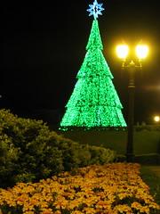 Parque Tanguá (:: through my eyes ::) Tags: curitiba paraná barigui tanguá natal christmas árvoredenatal natalemcuritiba parque parquebarigui parquetanguá