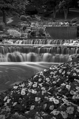Falls and flowers. (glhs279) Tags: waterblur water flowers movement bw bnw blancoynegro nd ndfilter nikon d600 slowshutter longexposure landscape waterfall stream alabama huntsville