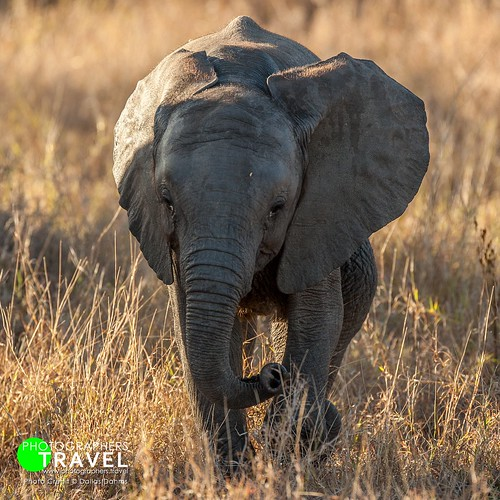 Baby elephant- Sabi Sabi 2013