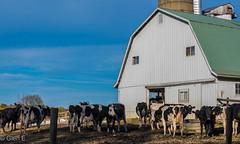 The Barn Yard (nebulous 1) Tags: amish amishcountry butter farm glene milk barn cheese cows nebulous1 nikon