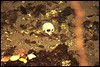 Monkey Skull in Sacred Cave, Pemba Island (Anghio Walser) Tags: pemba island beauty crab hermit stardust sky flying fox animal cloud