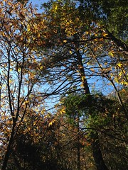 04 (emmess2) Tags: campiglia cinqueterre spezia autumn fall leaves