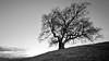 Chêne de Venon (Tdyy) Tags: nikon d7200 tokina 1116 uwa uga nature tree forest black white bw contrast france isere rhonealpes chene venon landscape outdoor