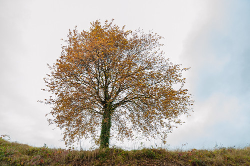 Realistic tree (without dream) - Realistische boom (zonder droom)