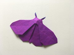 moth (shooroop83) Tags: origami insect butterfly moth