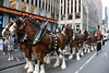 Picture Of Budweiser Clydesdale Horses Taken Outside Fox News Studios In New York City. Photo Taken Monday December 4, 2017 (ses7) Tags: budweiser clydesdale horses in new york city