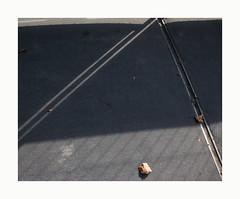^ (hélène chantemerle) Tags: rue trottoir sol macadam rails ombre feuillesmortes soleil geometry angle street shadow deadleaves sun