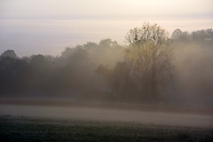 Mais le voilà qui monte en éclairant la brume (Excalibur67) Tags: nikon d750 sigma 70200f28apoexdgoshsm paysage landscape lumière levéedesoleil brume brouillard mist fog arbres trees
