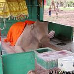 Preah Ko Sacred Bull Statue, Stung Treng thumbnail
