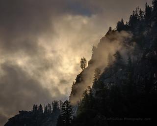 Trees in Yosemite Morning Mist