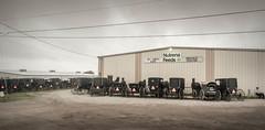 The Watchman (TuthFaree) Tags: amish buggies man beard auction feedstore mthope ohio horses rural farming agriculture wayoflife