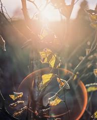 Pentax Flare. (kenneth.pelczar) Tags: soul living photography fun america usa newyork longisland green summer fall water beauty nature color negative 400asa f24 105mm 2017 camera film colors grain ishootfilm iso400 portra400 400 kodak kodakfilm analogue 6x7 pentax pentax6x7