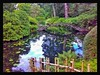 Arched Bridge (Develew) Tags: bridge archedspan water waterlillies shrubs trees